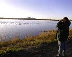 Bird Watching at Bosque del Apache NWR Photo