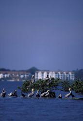 Pelican Island National Wildlife Refuge Photo