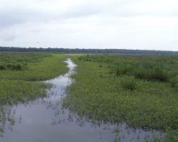 Tensas River National Wildlife Refuge Photo