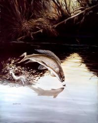 Arctic Grayling Photo