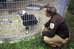 FWS Biologist with Condor Photo
