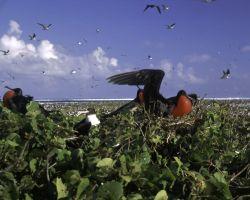 Johnston Island National Wildlife Refuge Photo