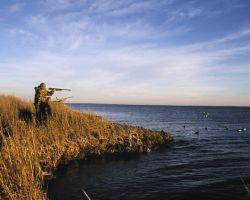 Duck Hunting Photo