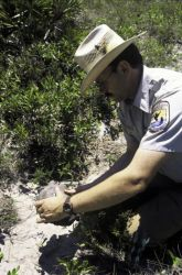 FWS Employee with Gopher Tortoise Photo