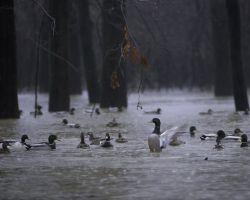 White River National Wildlife Refuge, Arkansas Photo