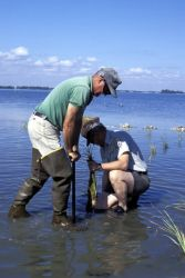 Habitat Restoration at Pelican Island NWR Photo