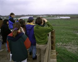 Bird Watching at San Luis NWR Photo