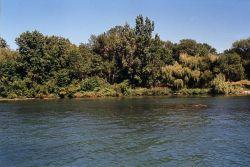 Calf Island Coastline at Detroit River International Wildlife Refuge Photo