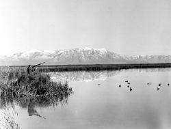 Waterfowl Hunting at Bear River Migratory Bird Refuge Photo