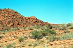 Desert Tortoise Habitat Photo
