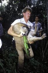 FWS Employee with Florida Panther Photo