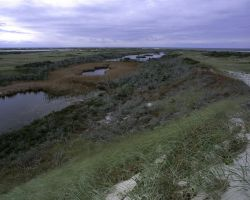 Monomoy National Wildlife Refuge Photo