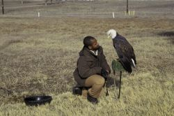 FWS Employee with Bald Eagle Photo