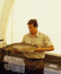 Nashua Hatchery Employee with Atlantic Salmon Photo