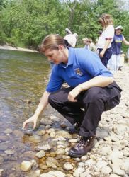 FWS Employee Releases Endangered Atlantic Salmon Fry Photo