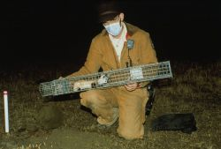 FWS Biologist Moves Black-Footed Ferret for Research Photo