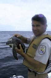 FWS Employee with Green Sea Turtle Photo