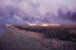 Wildfire at Prime Hook National Wildlife Refuge Photo