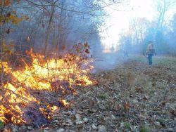 Joint Fire Science Program (JFSP) Prescribed burn at Chesapeake Marshlands National Wildlife Refuge Complex Photo