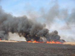Phragmites burning at Prime Hook National Wildlife Refuge Photo