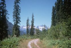 Forest Road Above Cooper Lake Photo