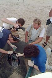 Loggerhead Sea Turtle Satellite Tracking Photo