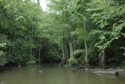 Cache River National Wildlife Refuge Photo