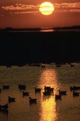 WO3713 Sunrise at Blackwater NWR Photo