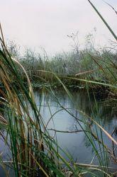 WO 713 Everglades National Park Photo
