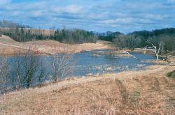 WO4309 Wetland Restoratlion Photo