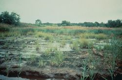 WO4335 Coastal Marsh Restoration Photo