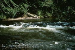WO8366 River Habitat Photo