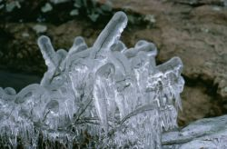 WO8578 Ice Sculptures Photo