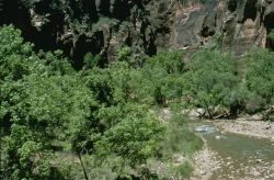 WO8068 Virgin River at Zion National Park Photo