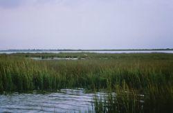 WO1694 Texas Coastal Estuary Photo