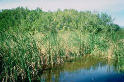 WO714 Everglades National Park, Florida Photo