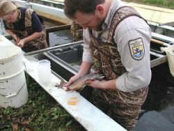 WOE5 Spawning Coaster Brook Trout Photo