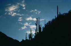 WO8110 Sabino Canyon, Arizona Photo