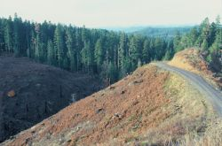 Spotted Owl Habitat Clear-cutting Photo