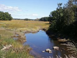 WOE173 Cascade Brook, Scarborough Marsh,(saltwater) Maine Photo