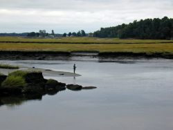 WOE174 Scarborough Marsh (saltwater) Maine Photo