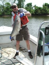 Mike Mangold with blue catfish at Dyke Marsh,Virginia Photo