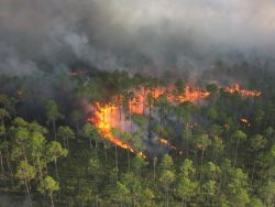 r4-ga-okr-forest aerial ignitions Photo