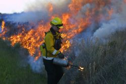 r4-nc-plr-firefighter uses driptorch to ignite fire Photo