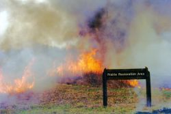 r6-il-cor-prairie restoration burn Photo