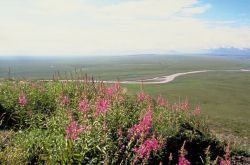 Coastal Plain Arctic National Wildlife Refuge Photo