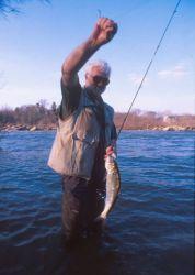 Shad,(Hickory) Fishing in the Rappahannock River, Virginia Photo