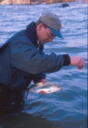 WOE123 Shad (Hickory) Fishing in the Rappahannock River, Virginia Photo