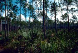 Pinelands Photo