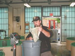 Employee of the Green Lake NFH in Maine move Atlantic Salmon Fry Photo
